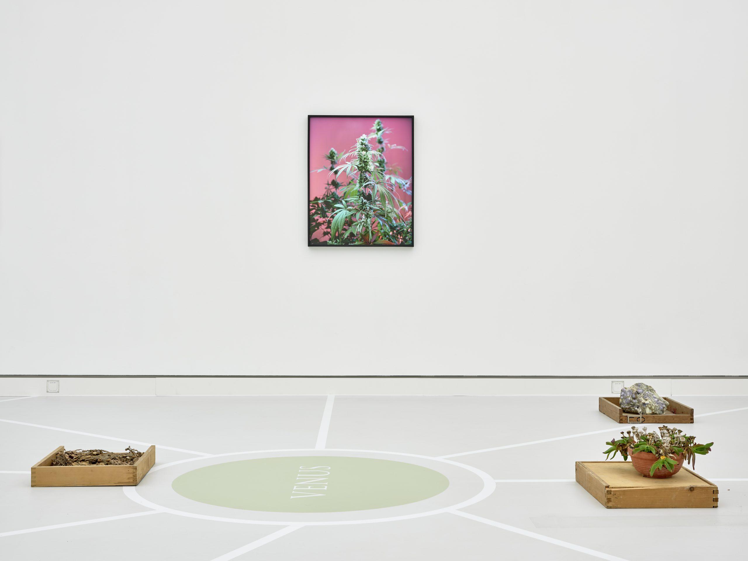 Joachim Koester, Kunsthalle Mainz, 2020